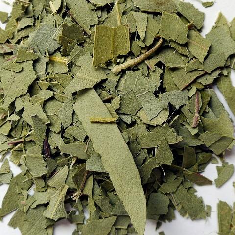 Eucalyptus*